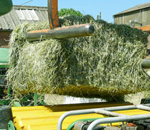 Haylage making at Porchester Farms