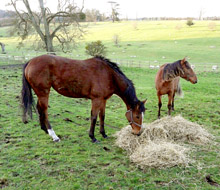 Highclere Castle Horse Feeds grows haylage on over 750 acres.