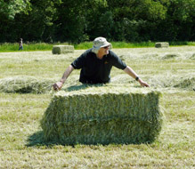 Baling in the fields